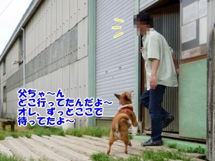 忠犬ポチ?