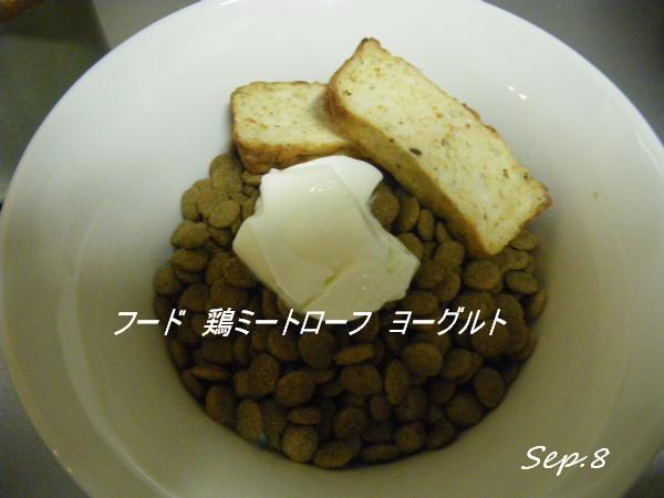 コピー (1) ~ IMGP0113