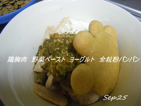 コピー (1) ~ IMGP0387