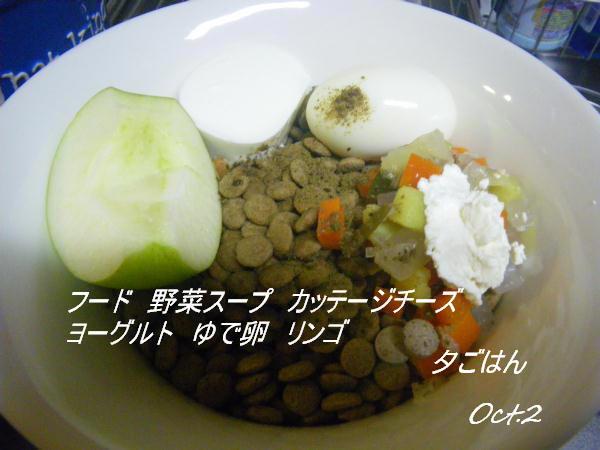 コピー (1) ~ IMGP0488