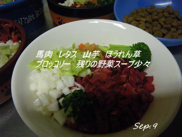 IMGP0122.jpg