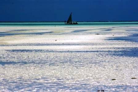 ザンジバル ビーチ 引き潮