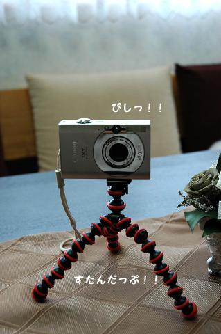 20100821-003.jpg