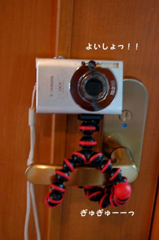 20100821-008.jpg