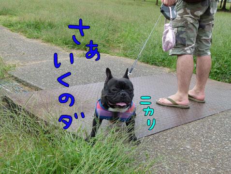 higanbuhi3.jpg