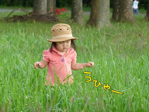higanbuhi7.jpg