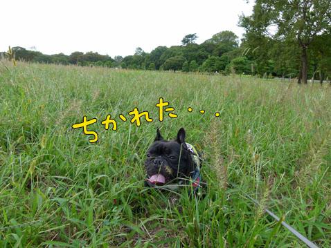 higanbuhi8.jpg