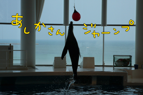 iyoiyo3.jpg