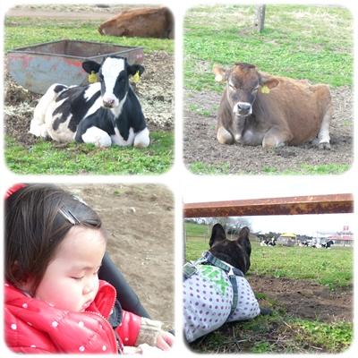 motherfarm11.jpg