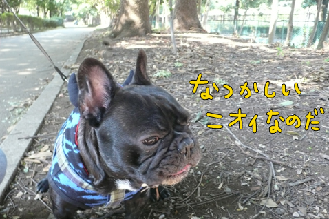 tisakuteokii1.jpg