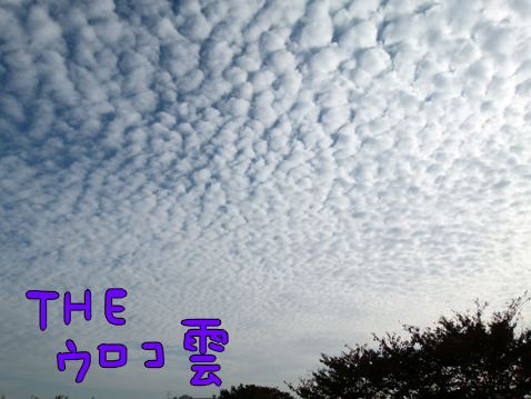 uroko3.jpg