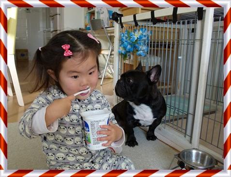 yogurt6.jpg