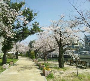 240414sakura_convert_20120414130653.jpg