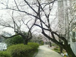 24045sakura_convert_20120406000051.jpg