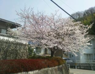 24048sakura_convert_20120408163550.jpg