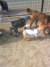 dog5_20110417203012.jpg