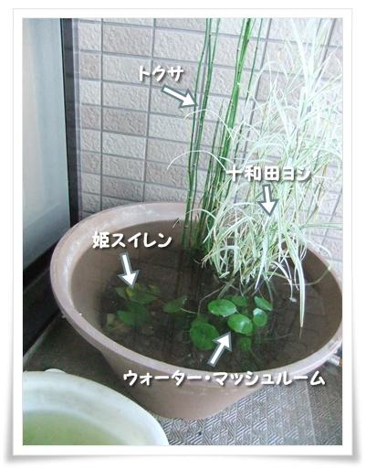 20100807-01.jpg