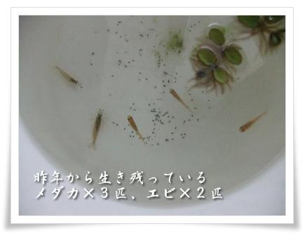 20100808-03.jpg
