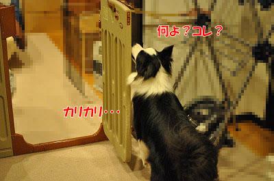 201105-myb01.jpg