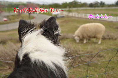 201105-nibo06.jpg