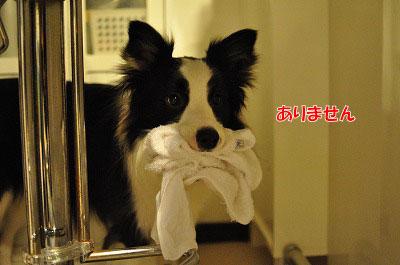 201105-nusu003.jpg