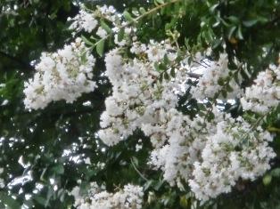 白がきれい