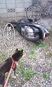101103_bike.jpg