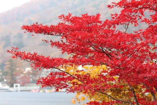 13中禅寺湖5
