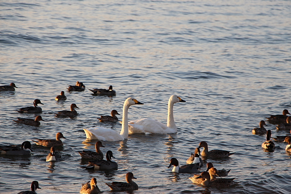 13猪苗代湖3