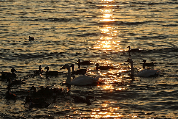 13猪苗代湖8