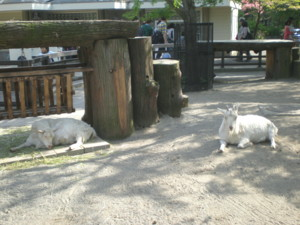 inokashira-zoo32.jpg