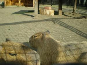 inokashira-zoo35.jpg