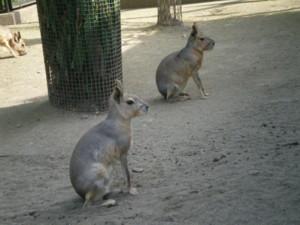 inokashira-zoo36.jpg