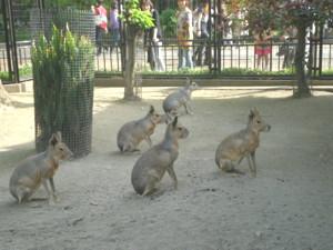 inokashira-zoo37.jpg