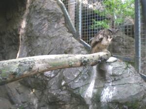 inokashira-zoo39.jpg