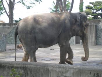 inokashira-zoo40.jpg