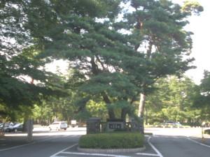 tama-cemetery9.jpg