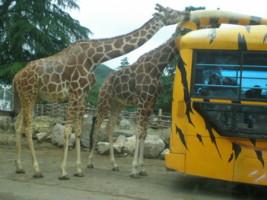tomioka-safaripark10.jpg