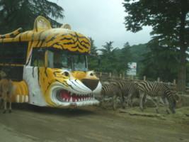 tomioka-safaripark11.jpg