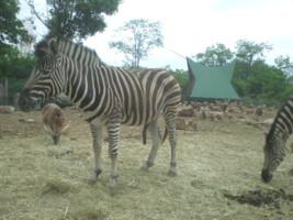 tomioka-safaripark12.jpg