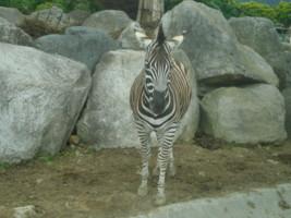 tomioka-safaripark13.jpg