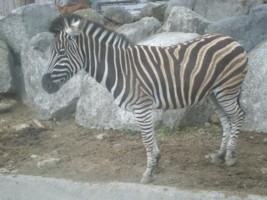 tomioka-safaripark14.jpg