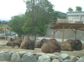 tomioka-safaripark15.jpg