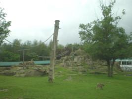 tomioka-safaripark17.jpg