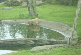 tomioka-safaripark18.jpg