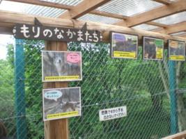 tomioka-safaripark21.jpg