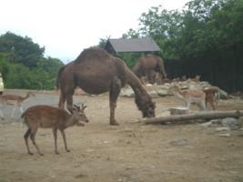 tomioka-safaripark23.jpg