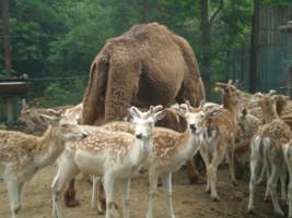 tomioka-safaripark25.jpg