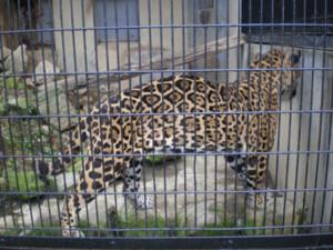 tomioka-safaripark44.jpg