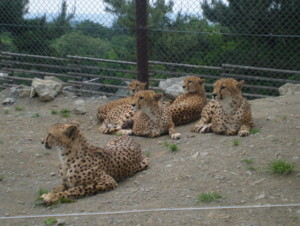 tomioka-safaripark45.jpg